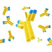 Antibodies (9299)