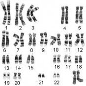 Human Cytogenetics (24)