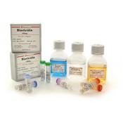 Antibiotics (28)